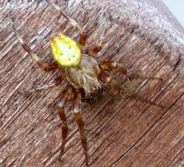 Noslēgumā- kāds vientuļš zirneklītis.