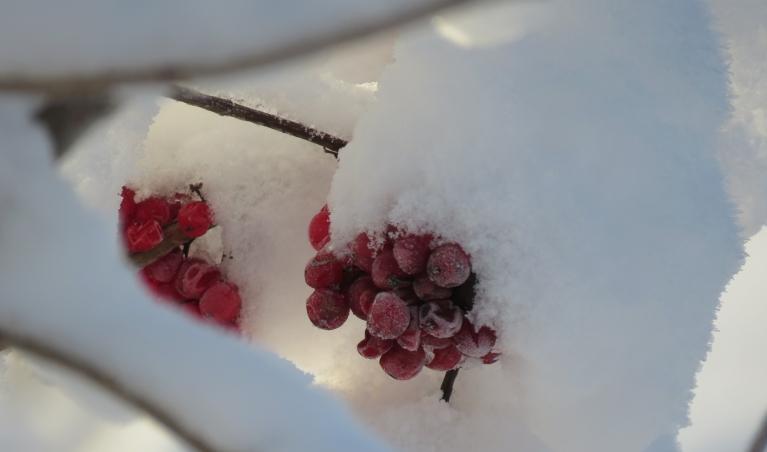 Sniega tik daudz, ka, šķiet, pietiku visai ziemai.