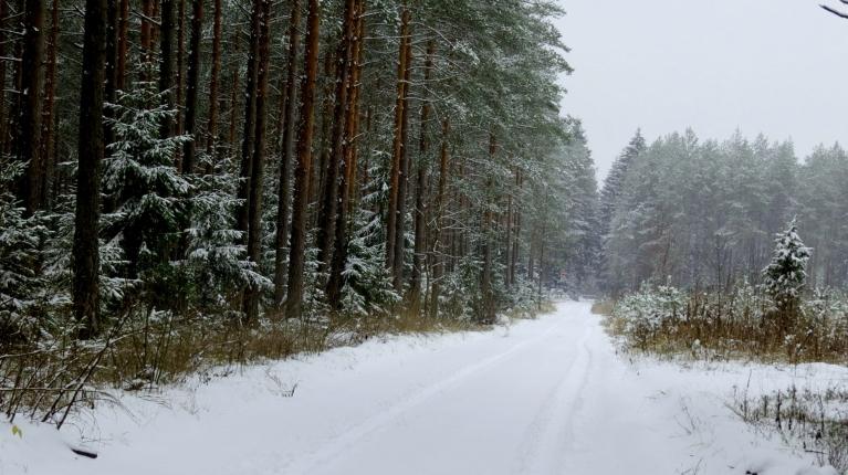 Bet šie ir Allažu meža ceļi.