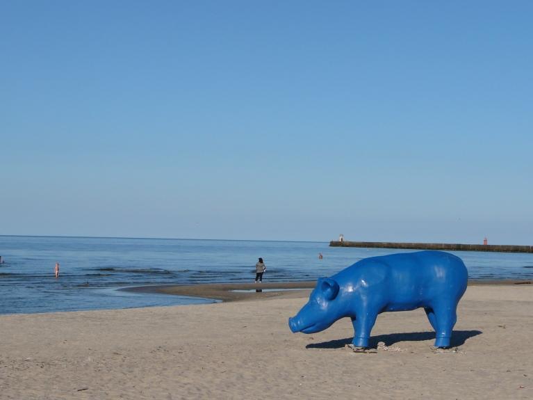 Autors: Migla. Zilais cerību Ruksis Rojas jūrmalā 3.augustā