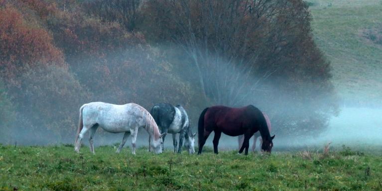 Ielejā sabiezē migla, drīz zirgi nebūs redzami, būs dzirdama tikai to klusā bubināšana.