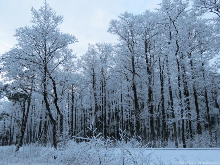 Ventspils, Reņķa dārzs. 2013.gada 10.janvāris.