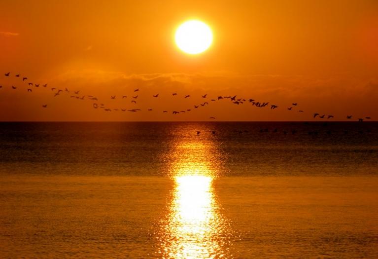 6. augusta saullēkts, kormorāni lielos baros pārvietojas uz Kolkas pusi.