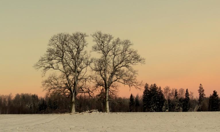 """Sniegs uzsnidzis uz nesasalušas zemes, kā kāju sper -tā dubļos """"līdz ausīm"""":)"""