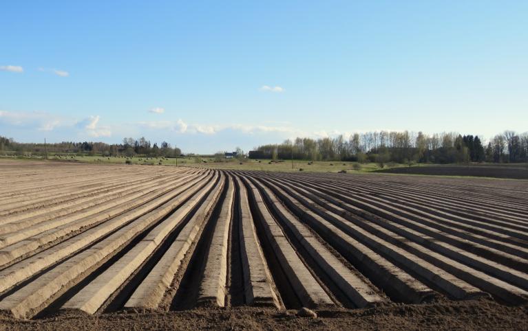 Laukos, turpinās pavasara darbi- šodien tiek sēti burkāni.