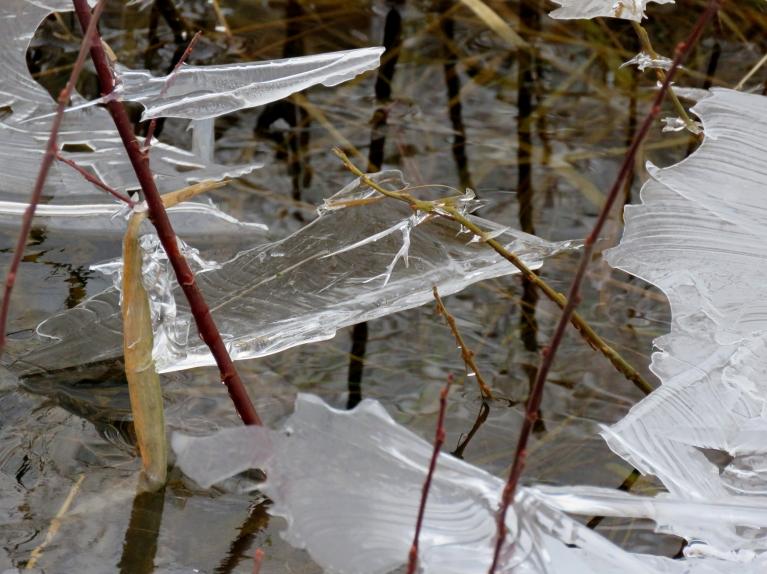 Ūdens līmenis upītē pa diennakti jūtami samazinājies, to var manīt pēc iepriekšējās dienas ledus paliekām uz krūmājiem.
