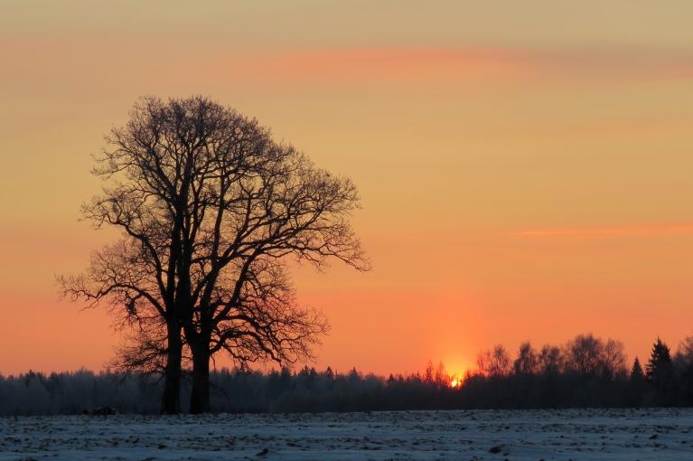 Naktī uz 7. janvāri t uz mirkli noslīdēja līdz -26, saullētktā -22,5 ar nepatīkami aukstu vējeli.