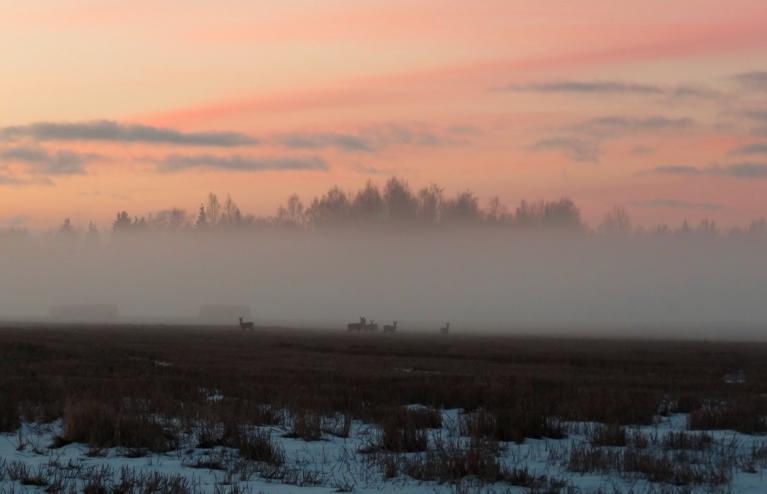 Rīts iesākās ar nelielu saliņu un miglu.