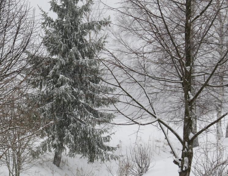 Pēc pusdienas sniega maisam gals atkal vaļā.
