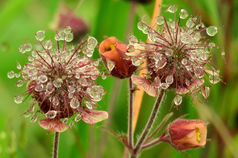 Pēc kārtējā lietus pļava rasas pilna.