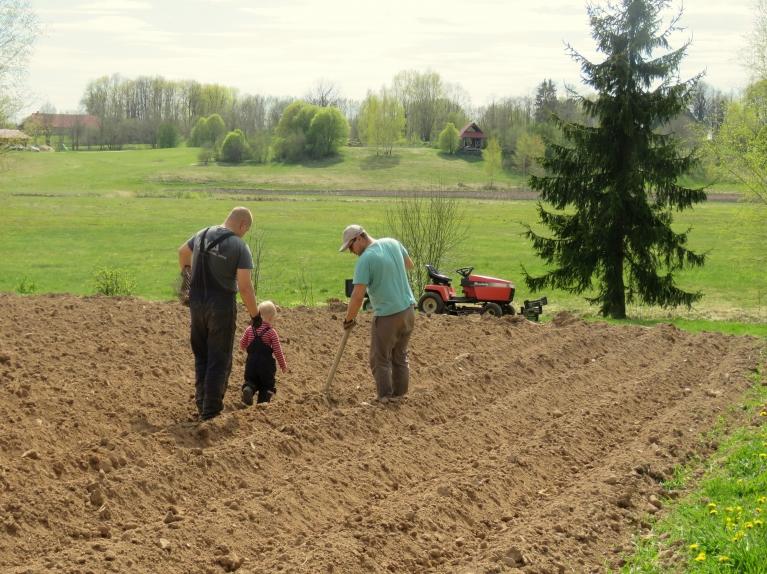 Mātes dienas kartupeļu stādīšanas talka.