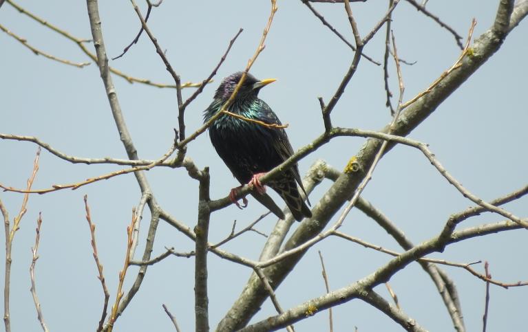 Koki vēl kaili, putniem maza barības bāze.