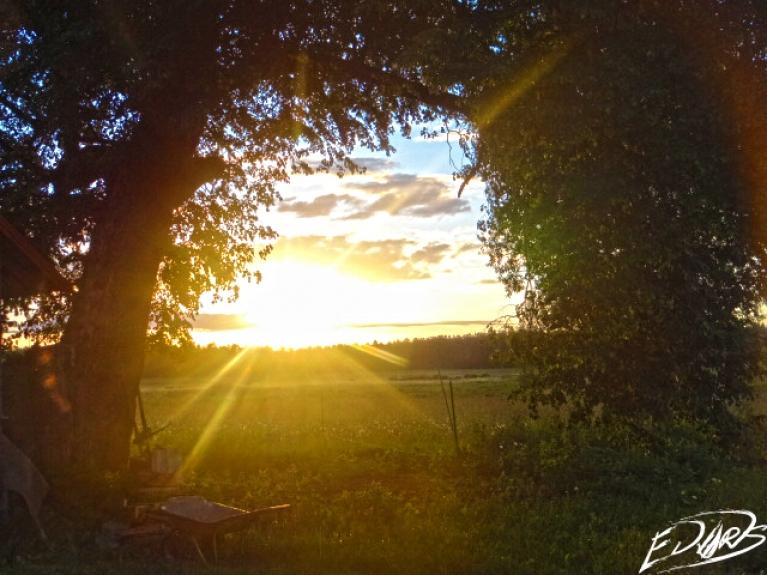Lauku saulriets