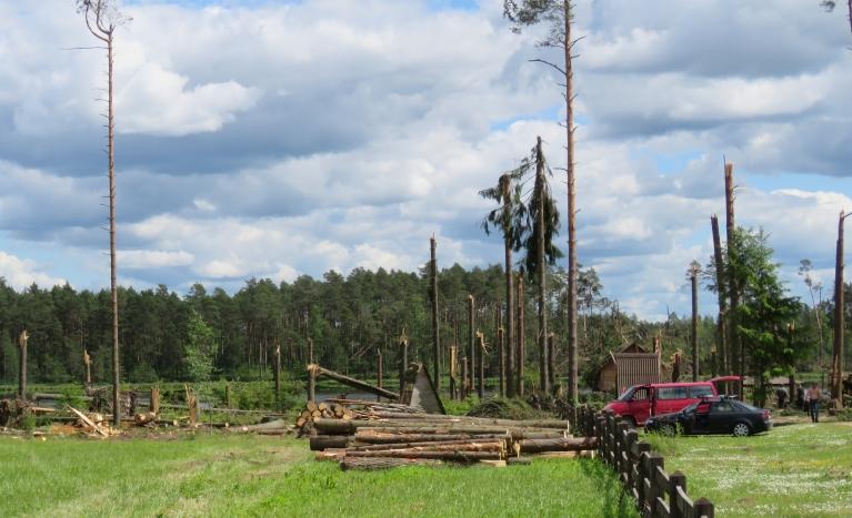 Daudzi no kokiem jau  nozāģēti, bet vēl joprojām var redzēt, kā virpulis kokus lauzis kā sērkociņus.
