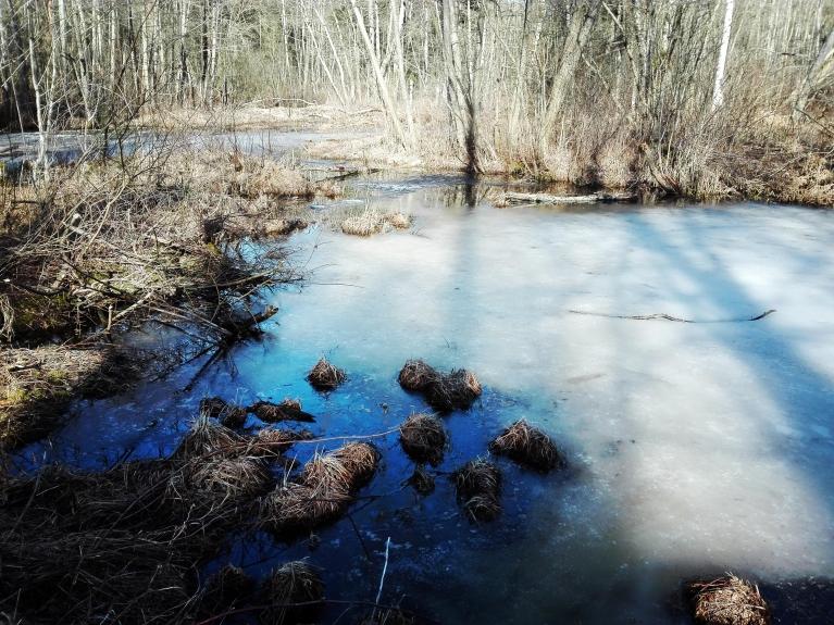 23. marts. Piejūras krokodilu dīķīša ledus.
