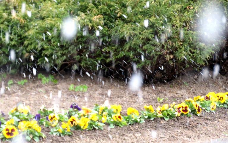 Allažos dienas vidū- kārtējais sniega pienesums, kas, sasniedzot zemi, tūdaļ izkusa.