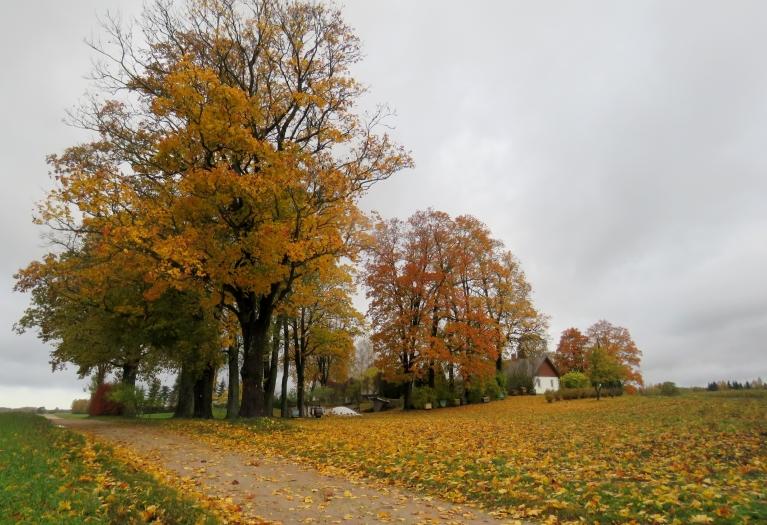 Zeme zeltainu lapu pilna.
