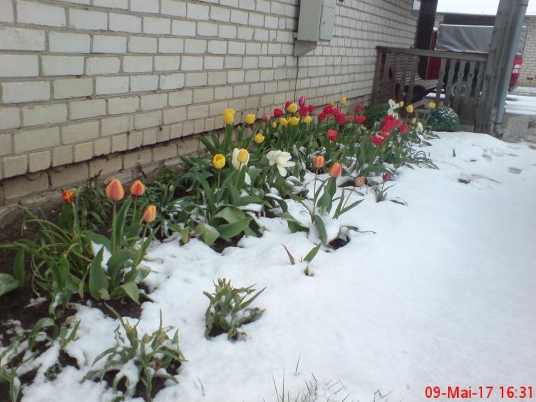 Krāsu kontrasti - par spīti sniegam