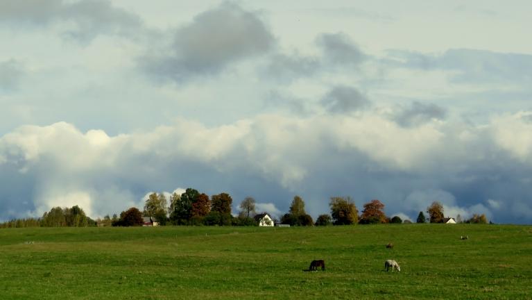 Lietavas veicinājušas zālāja ataugšanu nopļautajās ganībās.