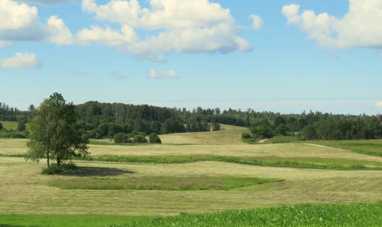8. julija rīta puse Vecpiebalgā, zemnieki izmanto bezlietus dienas, lai gatavotu zāli.