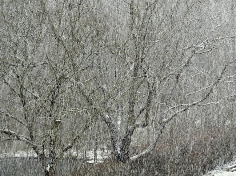 Ja rīta pusē lejup lidinājās vien pa kādai slinkai sniegpārslai, tad pēcpusdienā nogāza baltu.