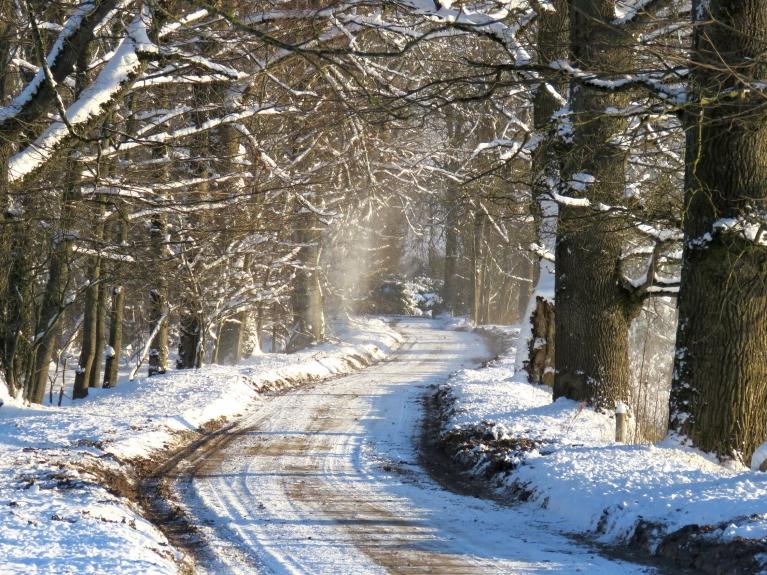 Vējš purina sasnigušos kokus un velk sniegu projām.