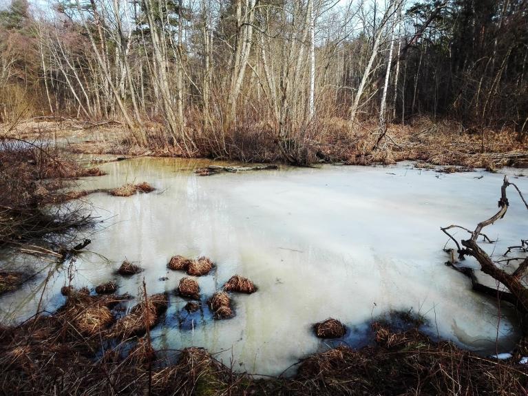 4. marts. Piejūras krokodilu dīķīša ledus.