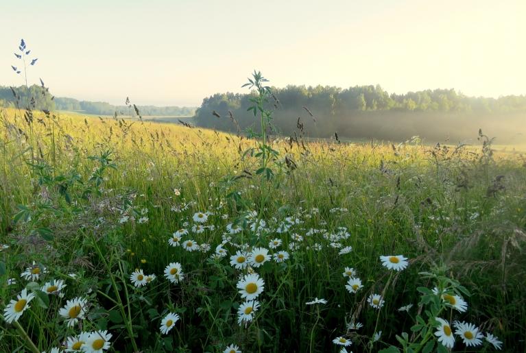 28. jūnija rīts- migla, kas saulei parādoties ātri izklīda.