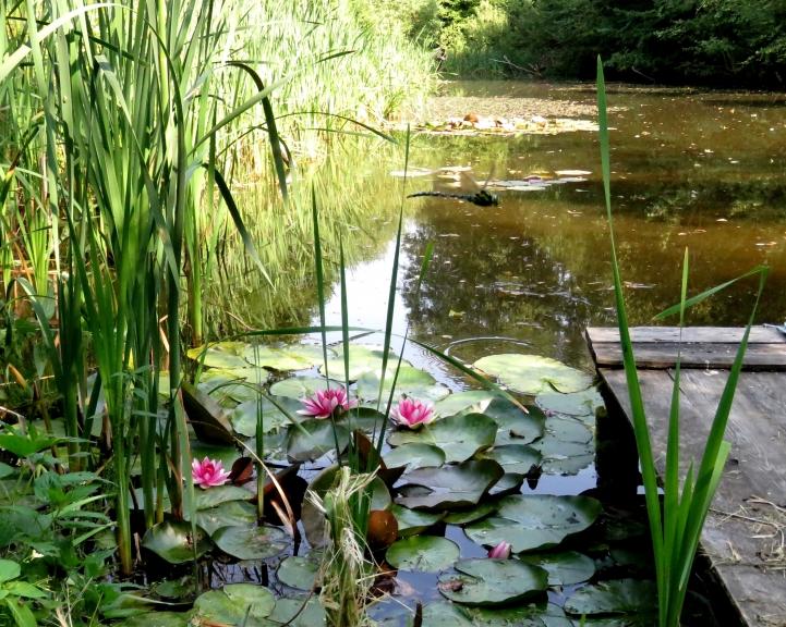 Pastrādāt šai karstumā nav iespējams, labāk pasēdēt ēniņā pie kāda ūdens dīķīša.