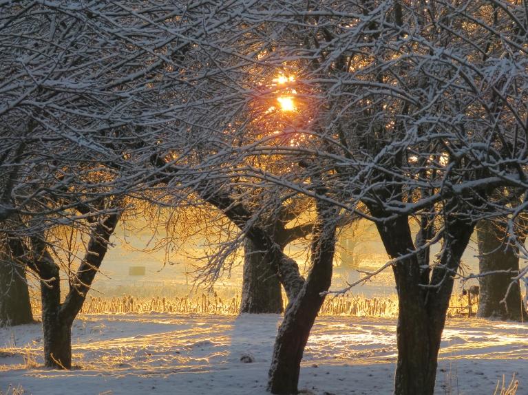 Šķiet, ka dienai būtu jābūt tikpat brīnišķai kā rīts, ja ne prognozes...