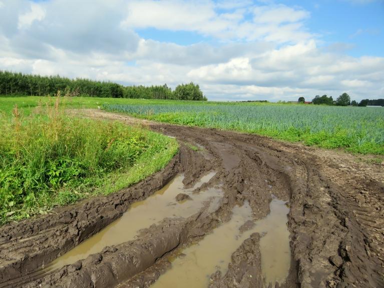 Laukos mitruma vēl netrūkst, pēc pēdējiem lietiem zemākās vietās manāmas peļķes.