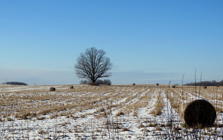 Sniega uz laukiem nav daudz, bet nu vismaz kaut kāds baltumiņš.
