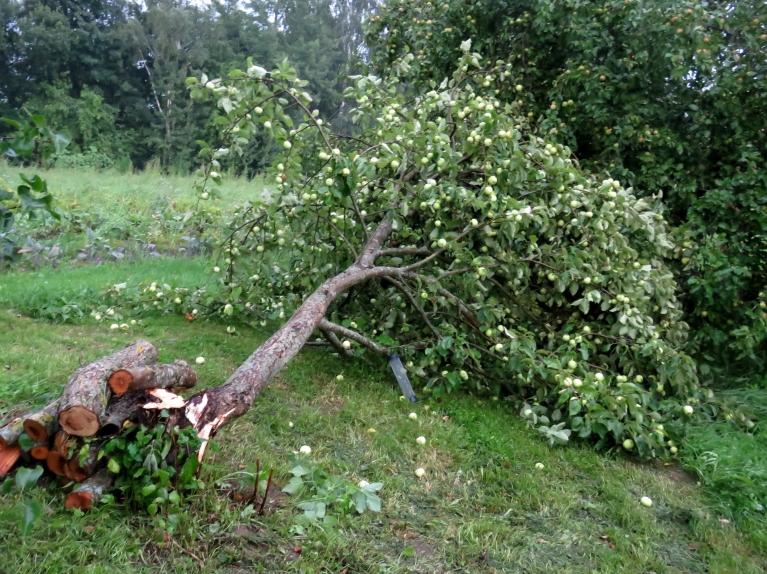"""Pēc pusstundas viss garām, """"vētras kontā"""" viena dzidrā ābele."""