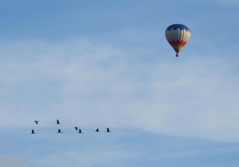 29. augusta vakars - debesis  lidoņu pilnas.