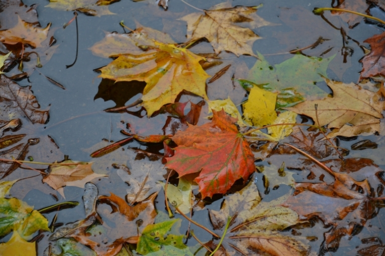 Pirmās rudens lapas peļķē - vienkārši skaists foto