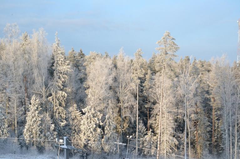 """Decembris mazliet atgādināja pašu gadu - no abiem galiem balts (pirmais gals nosacīts), bet pa vidu """"zaļais"""", siltais slapjums, kas jau mazliet piemirsies.."""