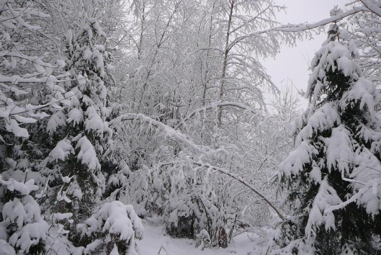 Autors: Migla. 8. decembris Allažu pusē pagāja pelēcīgi balts- sasnidzis, nosarmojis bet bez saules. Neskatoties uz visu, mežs izskatās fantastiski skaists.