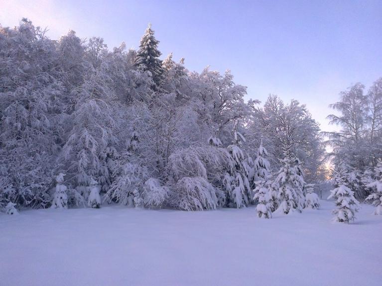 Autors:Emilis. Saule un sniegs Rankā, 8.12. Sniega segas biezums vidēji 30 - 35 cm.