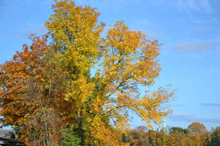 Oktobrī laikapstākļi bija ļoti mainīgi, bet tas netraucēja baudīt zelta rudeni.