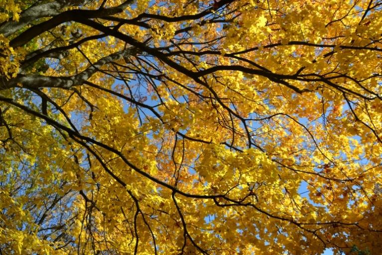 Oktobris sākaās ar septembra beigu pārņemto vēsumu, bet jau dažas dienas vēlāk laiks kļuva siltāks un saulainās dienas košās rudens lapas iemirdzējās kā īsts zelts...