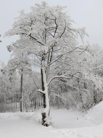 Autors: Ceļotājs. Sniegotā Kurzemes piekraste Ventspilī 9.12.