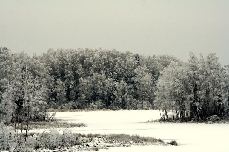 Autors: muntis. Vecpiebalga, 9.12. Pie Zobola ezera.