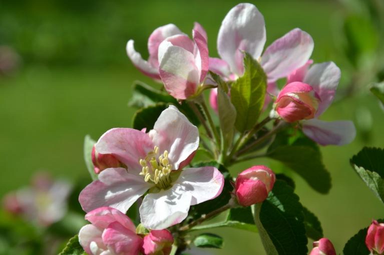Maija sākumā gan īslaicīgi kļuva vēsāks, bet arī maijs kopumā bija silts, mēneša beigās arī karsts un negaisiem bagāts.