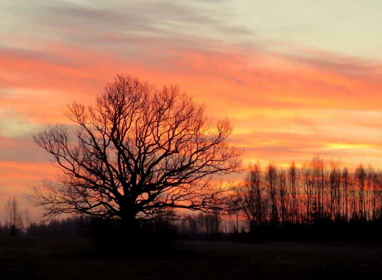 31. decembra sārtais rīts sola vējainu dienu.