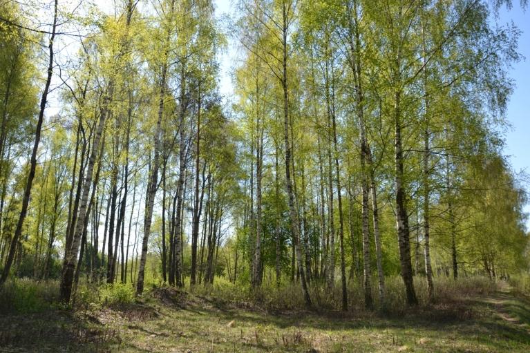 Arī aprīlī turpinājās siltais pavasaris - jau mēneša beigās koki bija salapojuši. Lieldienās (20.aprīlis) sākās ziedonis.