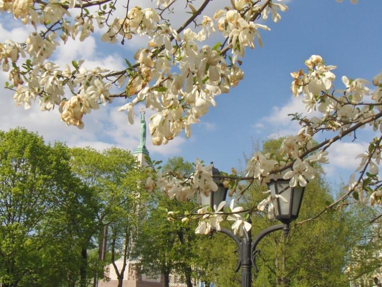 14. maijs - ziedonis Rīgas parkos.
