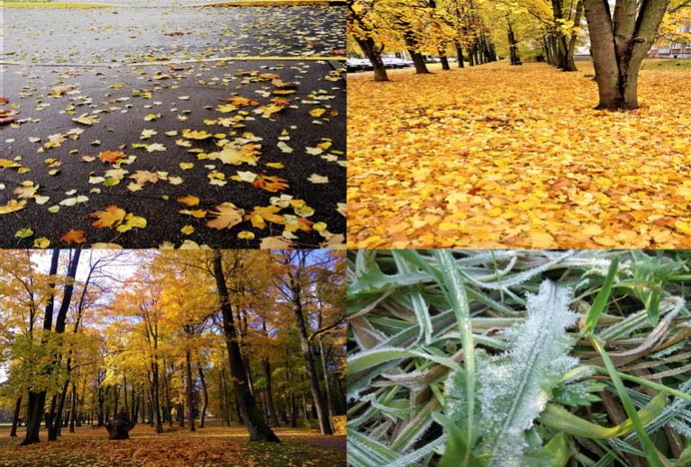 Oktobrī bija skaists zelta rudens un skaists lapkritis.