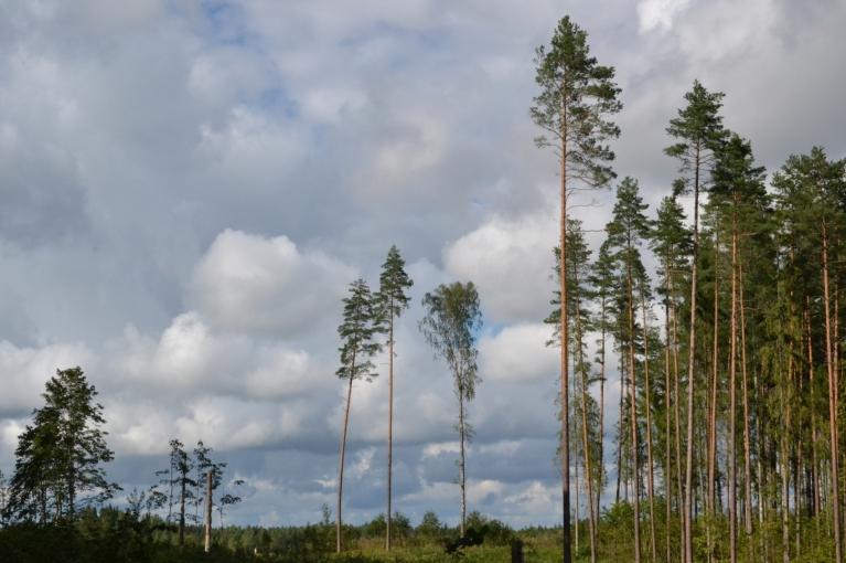 """Augusta sākums bija ekstremāli karsts ar labiem negaisiem, bet mēneša otrajā pusē iestājās """"Baltijas"""" slapjā vasara, kas pamazām pārgāja rudenī."""