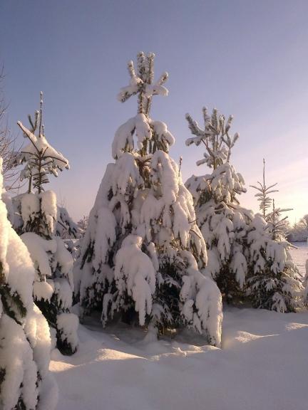 Autors: Emilis. Saule un sniegs Rankā, 8.12. Sniega segas biezums vidēji 30 - 35 cm.