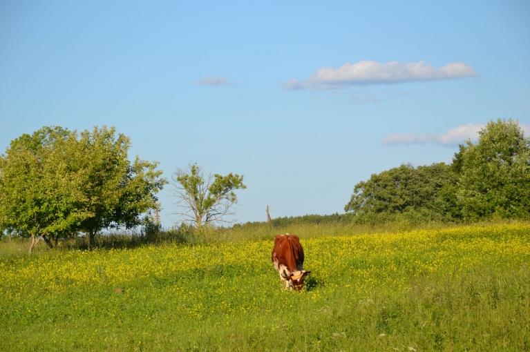 Jūnija vidus laukos - dienas optimāli siltas, pats, pats labums!